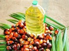 Oil palm in the North East: can we do it better?