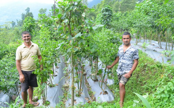 Dalley is good business for Mamzey farmers
