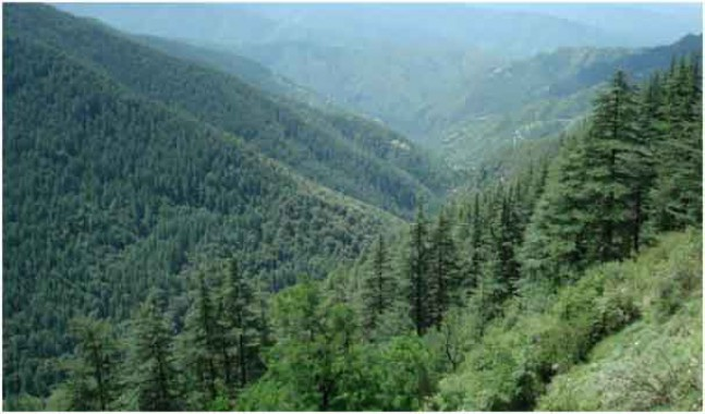 Traditional wisdom can save natural forests